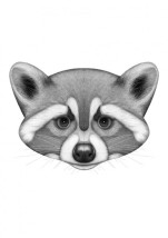 raccoon-charlotte-quillet