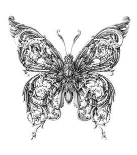 Alex-Konahin-little-wings_2